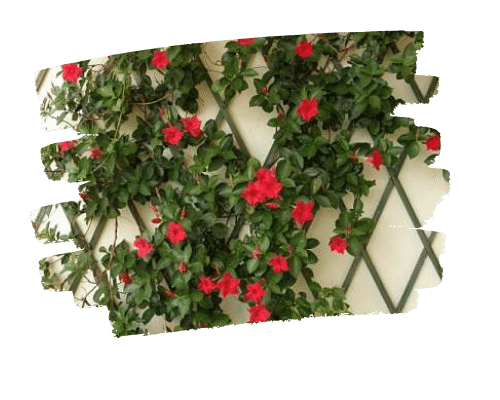 Ideas-jardin-terraza-terraceate