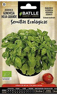 semilla-ecologica-albahaca-huerto-terraza