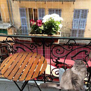 red-protección-balcon-gato