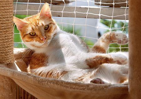 gato-hamaca-balcon-red-protección