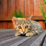 gato-terraza-balcon