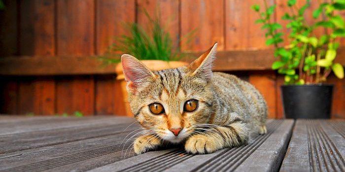 Una Terraza Segura Para Tu Gato