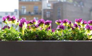 jardin-balcon-pequeño-flores
