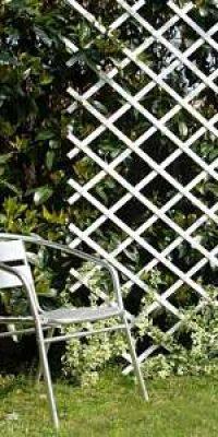 Celosia-blanca-jardin-terraza-balcon