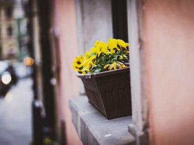 jardinera-repisa-ventana
